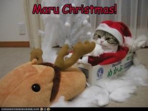 Maru Christmas!