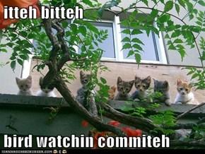 itteh bitteh  bird watchin commiteh