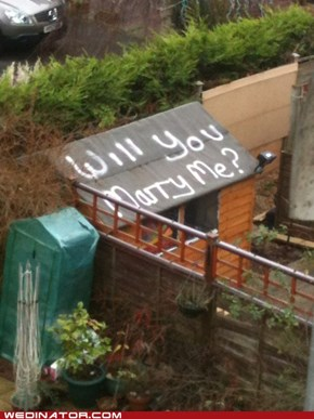 Backyard Proposal