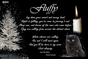A Monday Night Candle For Our Departed FurFriends, And For Those Who Still Need Our Help