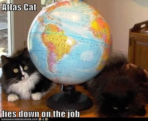 Atlas Cat  lies down on the job
