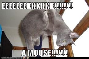 EEEEEEEKKKKKK!!!!!!!!  A MOUSE!!!!!!!