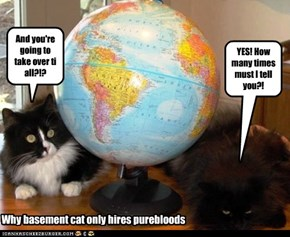 Why basement cat only hires purebloods