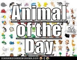Animal of the Day