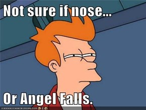 Not sure if nose...  Or Angel Falls.