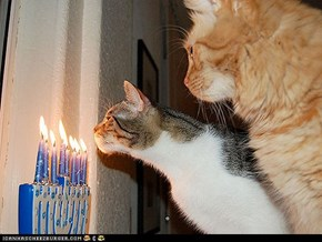 15 Pets Celebrating Chanukah