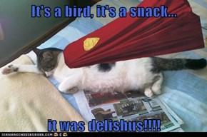 It's a bird, it's a snack...  it was delishus!!!!
