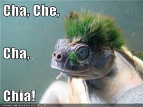 Cha, Che, Cha, Chia!