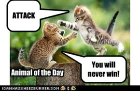 Animal of the day: ATTACK!