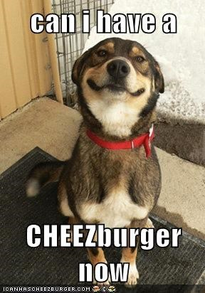 can i have a   CHEEZburger now
