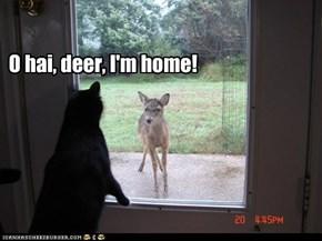 O hai, deer, I'm home!