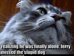 realizing he was finally alone, Jerry missed the stupid dog