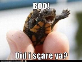 BOO!  Did i scare ya?