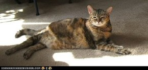 Buggie, April 10, 1993-Dec 8, 2008 RIP Warrior Princess!