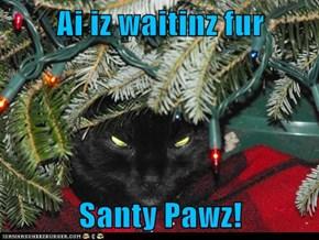 Ai iz waitinz fur  Santy Pawz!