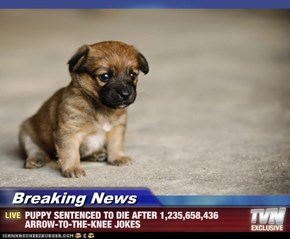 Breaking News - PUPPY SENTENCED TO DIE AFTER 1,235,658,436 ARROW-TO-THE-KNEE JOKES
