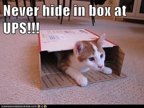 Never hide in box at UPS!!!