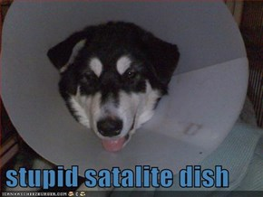 stupid satalite dish