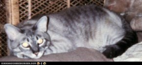 Draggie, the White Dragon, Buggie's brother, April 10, 1993-Feb 6, 2004. RIP, sweet prince.