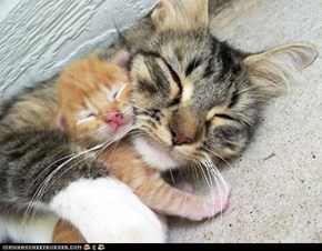 Cyoot Kittehs of teh Day: Keep Me Warm, Mama