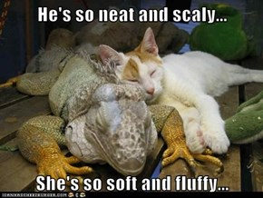 He's so neat and scaly...  She's so soft and fluffy...