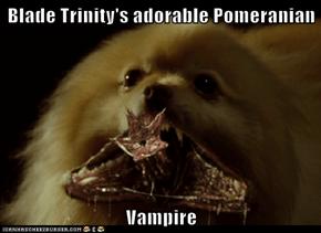 Blade Trinity's adorable Pomeranian  Vampire