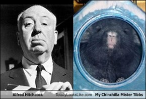 Alfred Hitchcock Totally Looks Like My Chinchilla Mister Tibbs