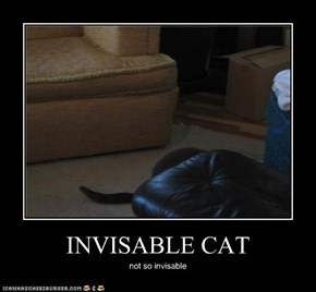 INVISABLE CAT