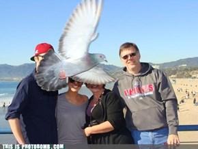 Family Birdbomb