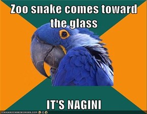 Zoo snake comes toward the glass  IT'S NAGINI