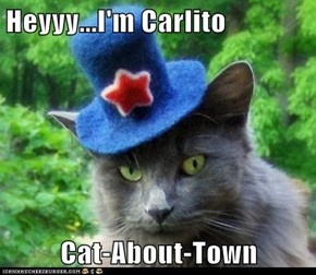 Heyyy...I'm Carlito  Cat-About-Town
