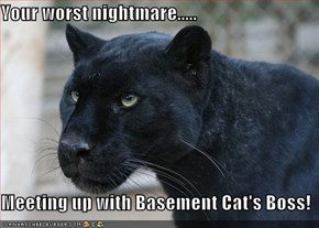 Your worst nightmare.....  Meeting up with Basement Cat's Boss!