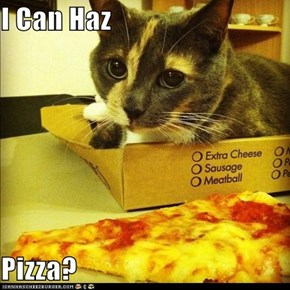 I Can Haz  Pizza?