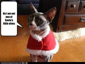 No I am not one of Santa's little elves