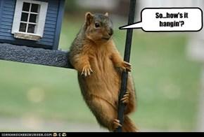 So...how's it hangin'?