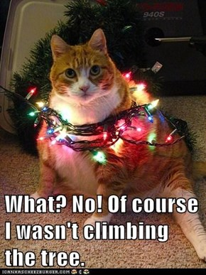 What? No! Of course I wasn't climbing the tree.
