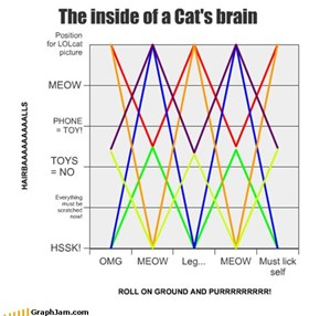 The inside of a Cat's brain