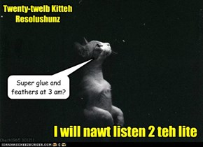 Twenty-twelb Kitteh Resolushunz