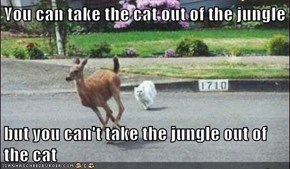 You can take the cat out of the jungle  but you can't take the jungle out of the cat
