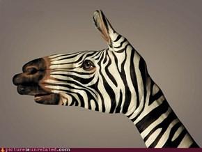 Handy Zebra