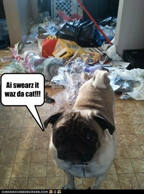 Ai swearz it waz da cat!!!