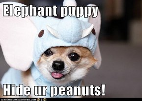 Elephant puppy  Hide ur peanuts!