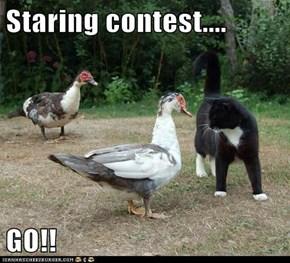 Staring contest....  GO!!