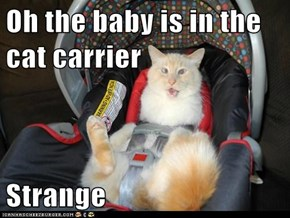 Oh the baby is in the cat carrier   Strange