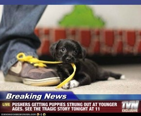 Breaking News - PUSHERS GETTING PUPPIES STRUNG OUT AT YOUNGER AGES. SEE THE TRAGIC STORY TONIGHT AT 11