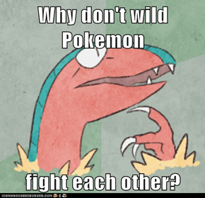 Why don't wild Pokemon  fight each other?