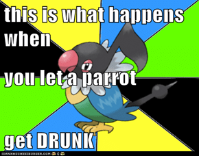 this is what happens when you let a parrot get DRUNK
