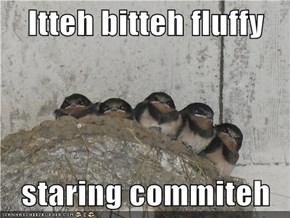 Itteh bitteh fluffy  staring commiteh
