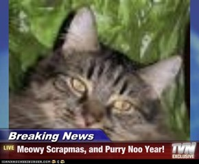 Breaking News - Meowy Scrapmas, and Purry Noo Year!