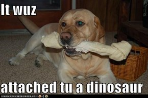 It wuz   attached tu a dinosaur
